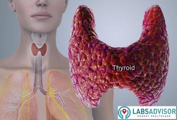 Thyroid_Gland_India_LabsAdvisor